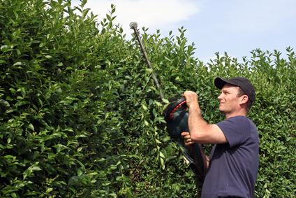 Gärtner erledigt Gartenarbeit.